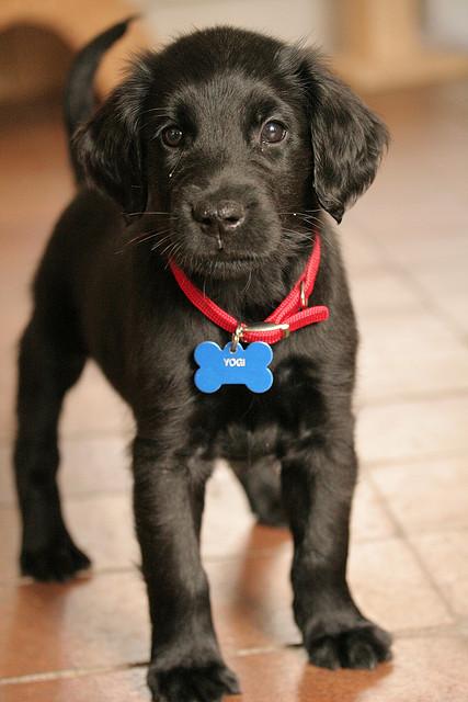 i need him.