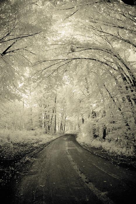 frosty canopy