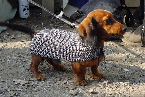 Renaissance faire puppyness :)