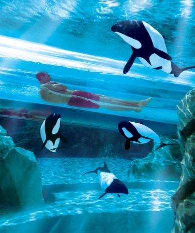 Aquatica's Dolphin Plunge