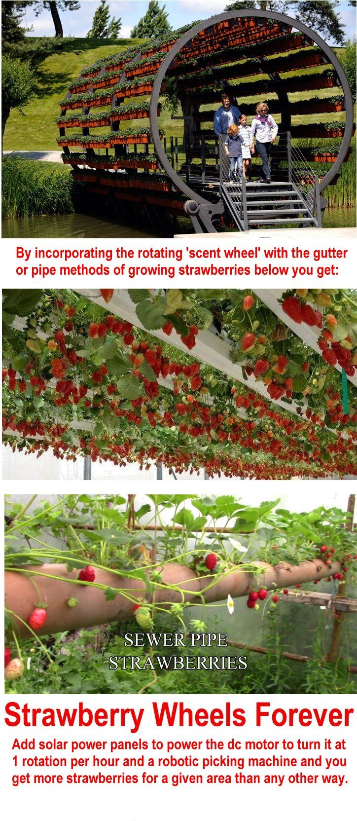 Strawberries growing in rotation idea