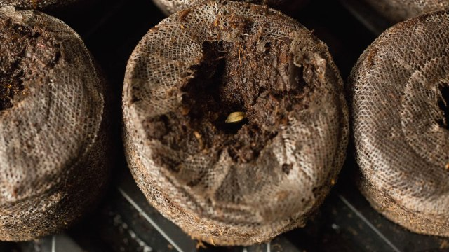 How To Use Jiffy Pellets For Germinating Marijuana Seeds