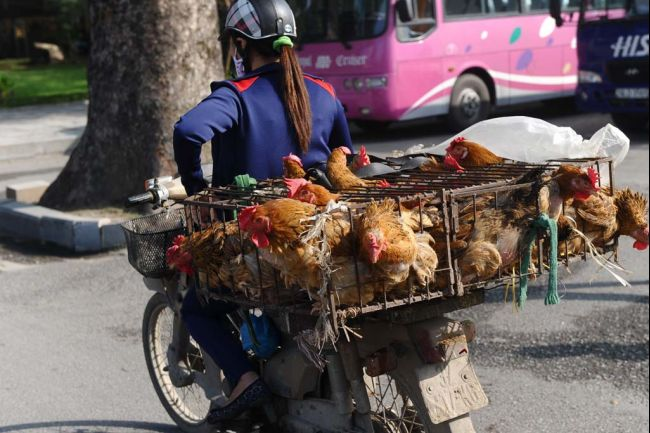 poultry_moto_1[1]