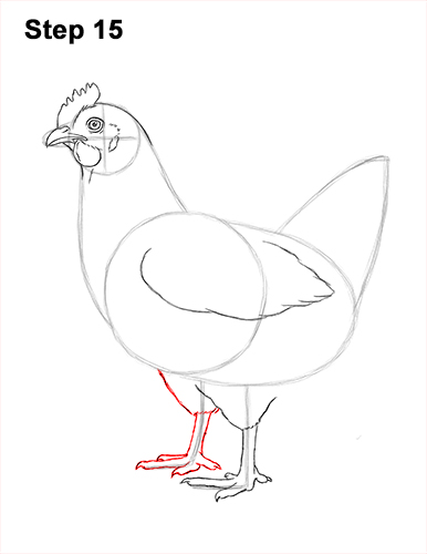 How to Draw a Chicken (Hen)
