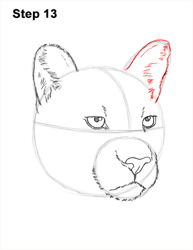 How to Draw a Cougar (Head Detail) VIDEO & Step-by-Step