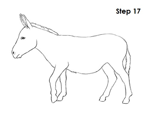 How to Draw a Donkey