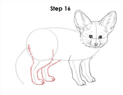 How to Draw a Fennec Fox