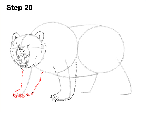 How to Draw a Grizzly Bear (Growling)