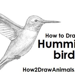Hummingbird Diagram Of Color Hino 500 Wiring How To Draw A