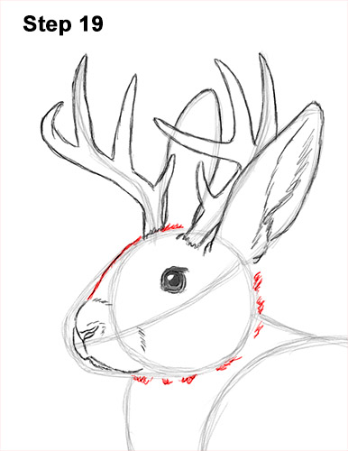 How to Draw a Jackalope VIDEO & Step-by-Step Pictures