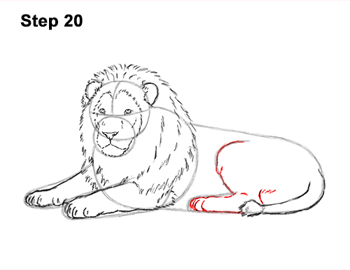 How to Draw a Lion (Color) VIDEO & Step-by-Step Pictures