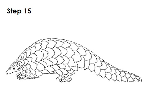 How to Draw a Pangolin