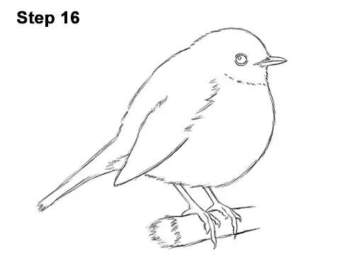 How to Draw a Robin (European) Bird