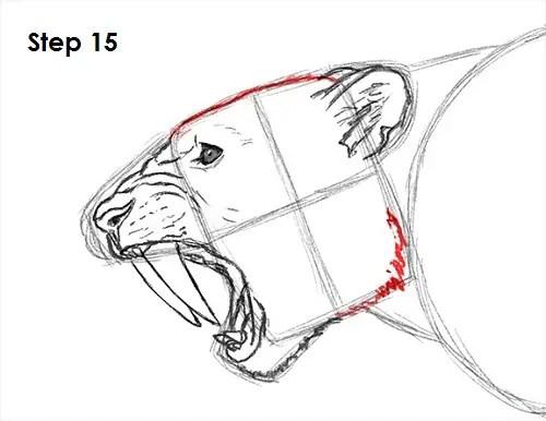Saber Tooth Tiger Drawing