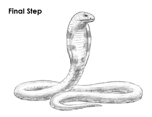 How to Draw a Snake (King Cobra) VIDEO & Step-by-Step Pictures