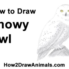 Diagram Turtle S Head Onan Generator Marine How To Draw A Snowy Owl