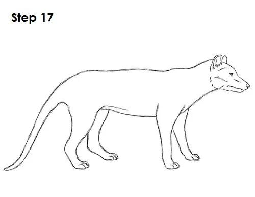 How to Draw a Tasmanian Tiger (Thylacine)