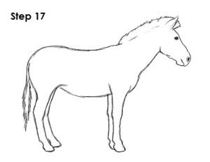 zebra draw drawing step tail