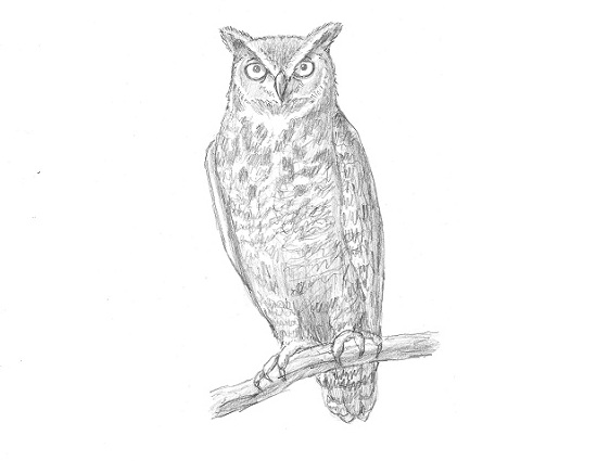 How to Draw an Owl (Great-Horned) Flying