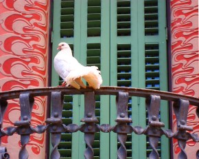 A feathered visitor lands on the balcony of the Casa Museu Gaudi at Park Güell.