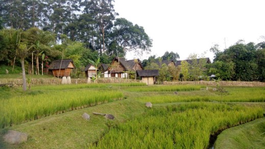 A picturesque paddy field and farm houses near the park entrance