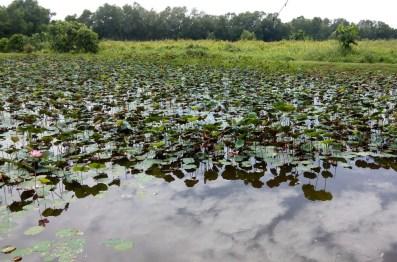 paya-indah-wetlands_115505
