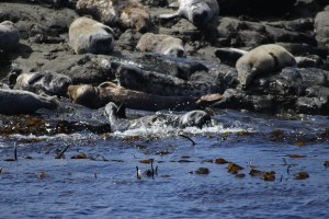 Seals by the shore