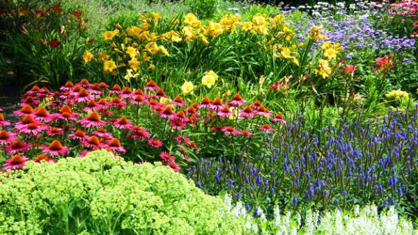 perennials sun & shade types