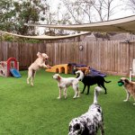 How To Ensure Your Pet's Outdoor Dog House