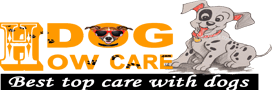 How to dog care