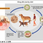 The life cycle of fleas
