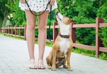 Ignoring Your Dog Can Teach Good Manners