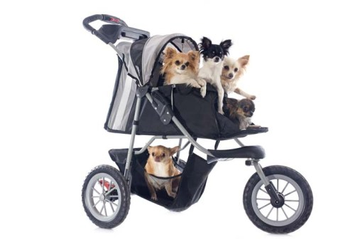 Best Dog Strollers Reviews
