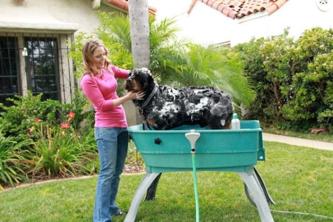 HOW TO BATHE YOUR DOG AT HOME