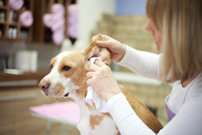 How to dog grooming save you money best top care with dogs clean dogs eyes and ears solutioingenieria Gallery