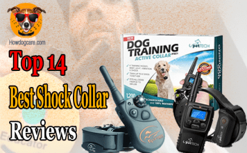 Top 14 Best Shock Collar Reviews