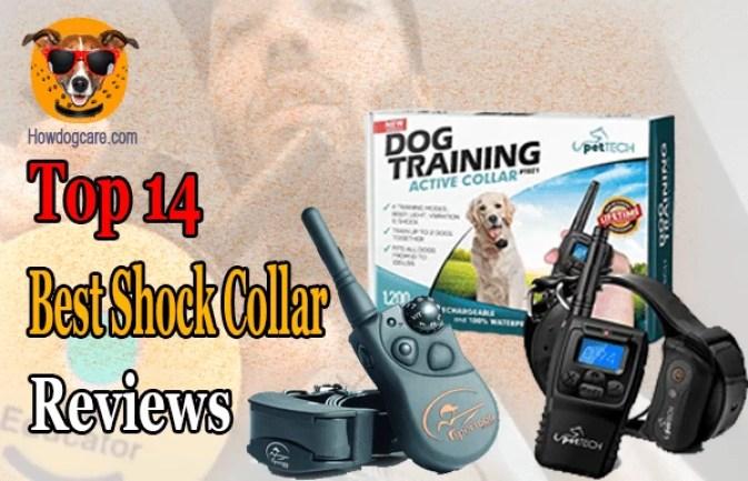 Top 14 Best Shock Collar Reviews