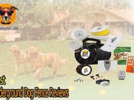 Top 9 Best Underground Dog Fence Reviews