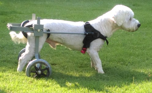 best dog wheelchair information and top 6 reviews best top care