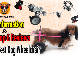 Best Dog Wheelchair Information and Top 6 Reviews