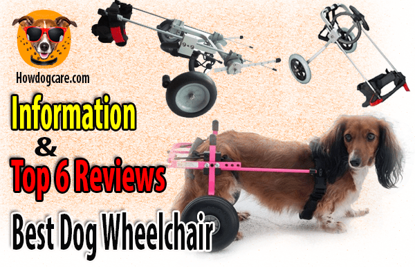 wheelchair dog kids backpack chair best information and top 6 reviews care