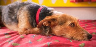 How to remove dog hair from mattress