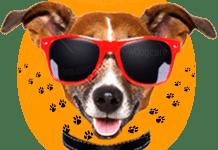 Top 15 Best Dog Sunglasses Reviews