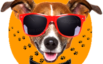 Top 15 Best Dog Sunglasses Reviews