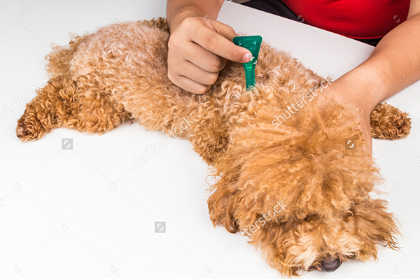 Frontline Plus - Treatment for lice in dogs