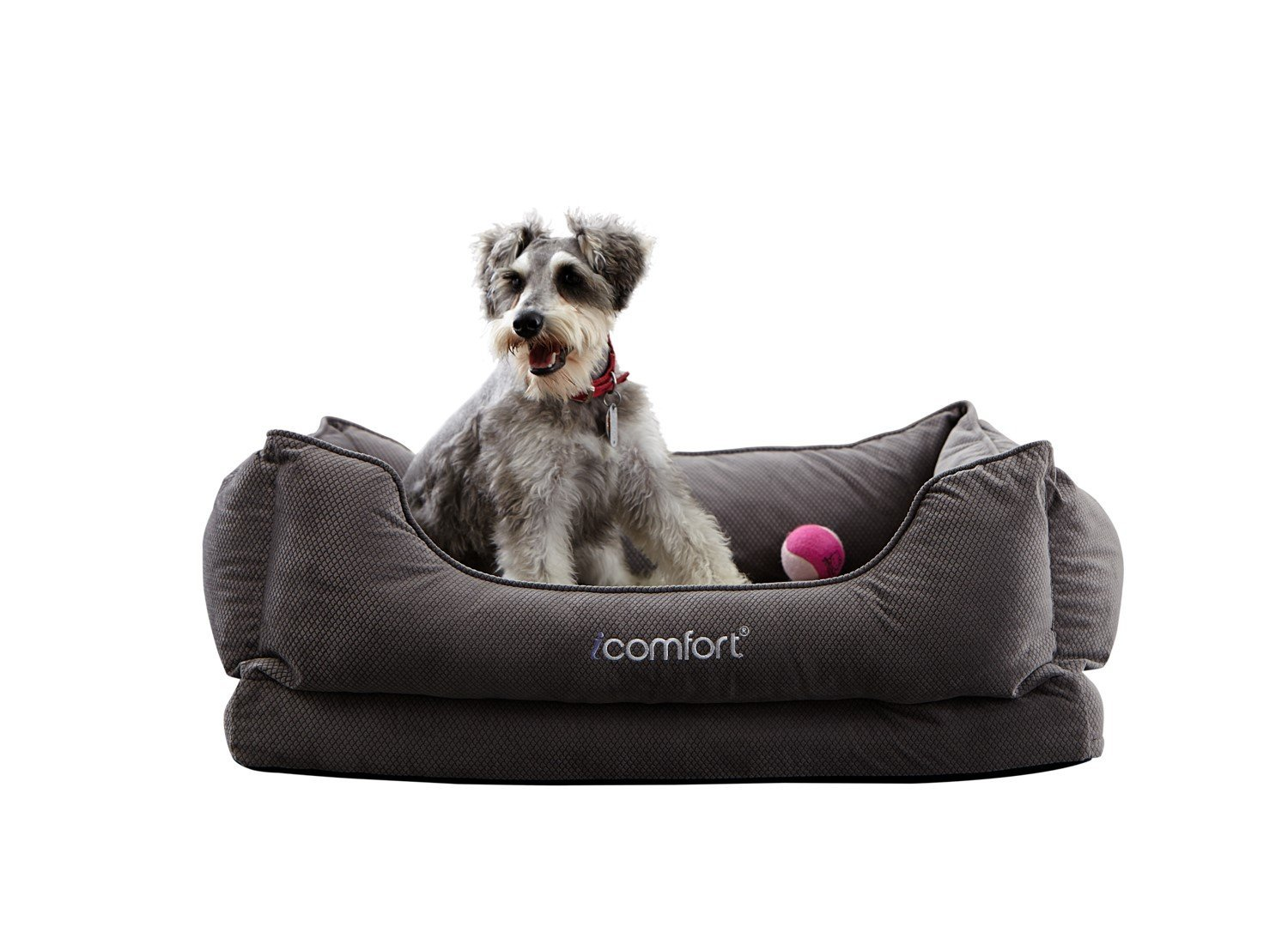 Top 5 Best Memory Foam Dog Beds Reviews - Best top care