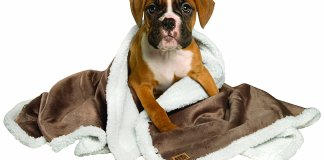 Best Dog Blankets For Waterproof, Sleep & Warmth