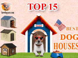 Best Dog houses Review