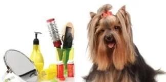 Dog Grooming Save You Money