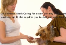 How To Ear Mites In Dogs Best Top Care With Dogs